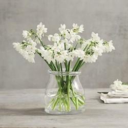 Mini vase H15 x W15cm