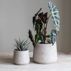 Stratton Set of 2 tapered plant pots, Cement/Stone