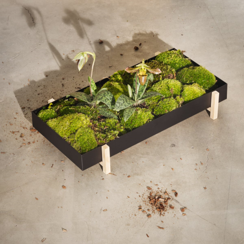 Botanical Tray planter, H5 x W20cm, Black