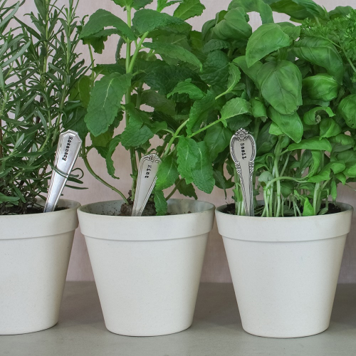 Set of 6 herb planters, 6cm, Silver Plated