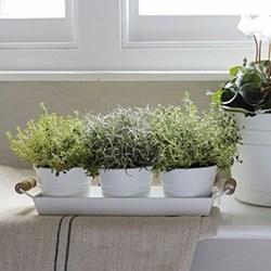 Herb pots with tray L33 x W11cm