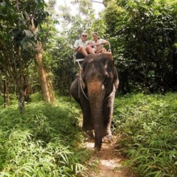 Elephant trekking for two