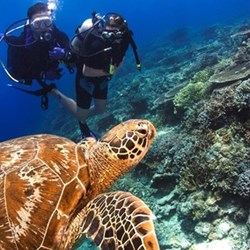 Scuba diving trip for two