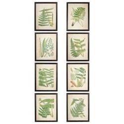 Fern Set of 8 framed prints, W47 x H59cm
