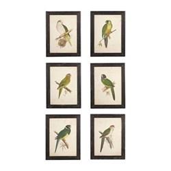 Set of 6 framed prints W38 x H50cm