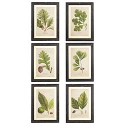 Set of 6 framed tree leaf prints 42 x 58cm