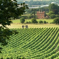 Tasting and tour for two at Chapel Down winery