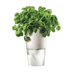 Herb pot, self watering 11cm