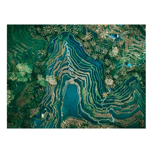 Aerial view of rice terraces, Bali Mounted print, H51 x W69cm, Perspex