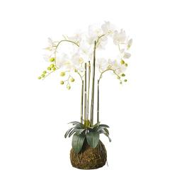 Faux planted phalaenopsis orchid, medium, white