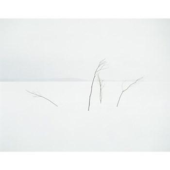 Quadrinity by Annabelle Nicoll Photographic print, 77 x 97cm