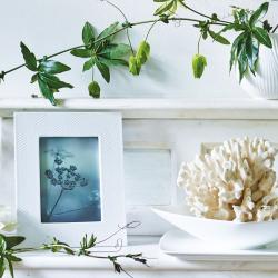 "White Folia Photograph frame, 4 x 6"""