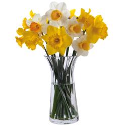 Florabundance Daffodil vase, H22.5cm, Clear
