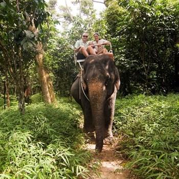 Elephant trekking for two