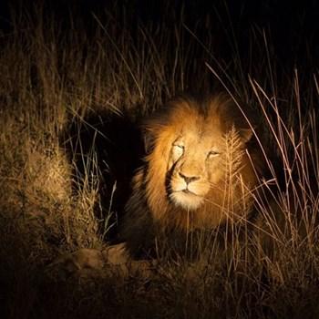 Night time safari for two
