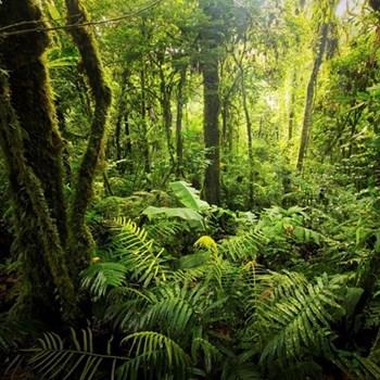 Jungle trek for two