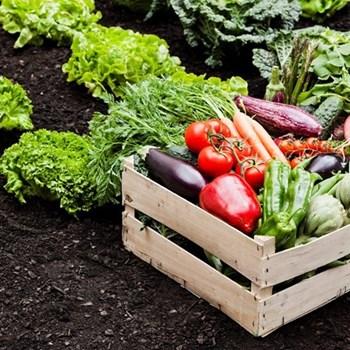 Vegetable garden fund
