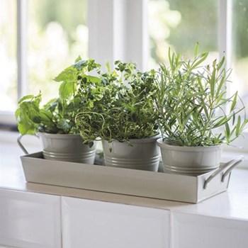 3 pots on a tray, H9 x L43 x W14cm; pots D11.5cm, clay