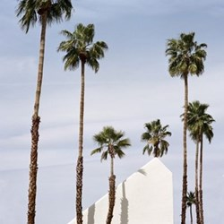Palm Springs by Sinziana Velicescu Fine art photographic print, H42 x W42cm
