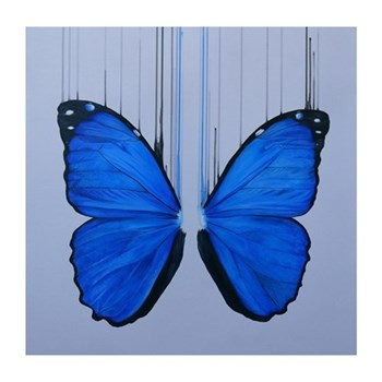 Example Artwork Morpho by Louise McNaught