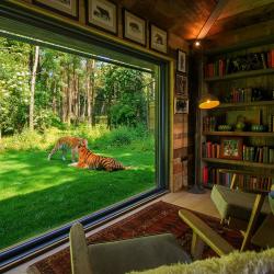 Tiger Lodge Overnight Stay, one night