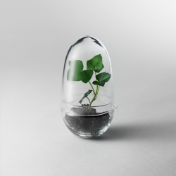 Grow Small greenhouse, D8 x H14cm, Clear
