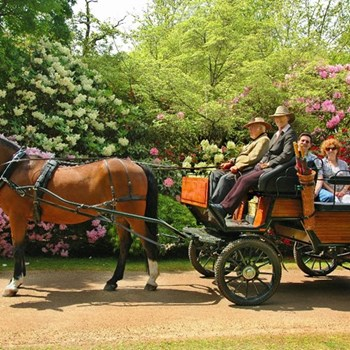 Horse Drawn Carriage Ride & Afternoon Tea for two with Ascot Carriages and Oakley Court