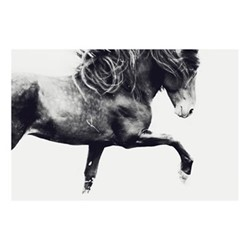 Sindri by Astrid Harrisson Fine art photographic print, H28 x W42cm
