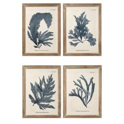 Seaweed Set of 4 framed prints, H61 x W83cm