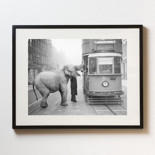 Hungry Elephant Framed photograph, H58 x W69cm