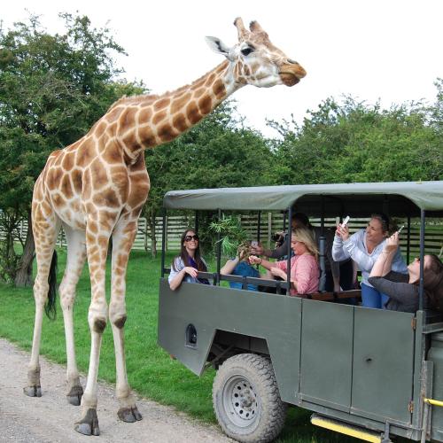 AAA Safari, day pass