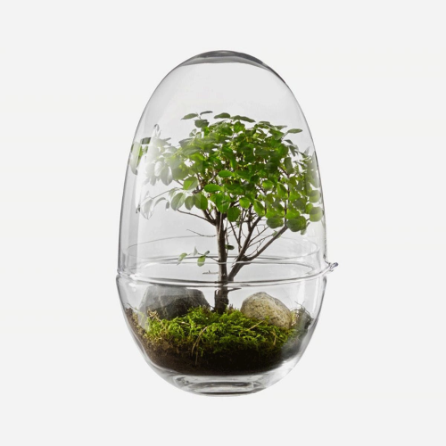 Grow Medium greenhouse, D12 x H24cm, Clear