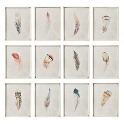 Feather Set of 12 framed prints, H31 x W24cm
